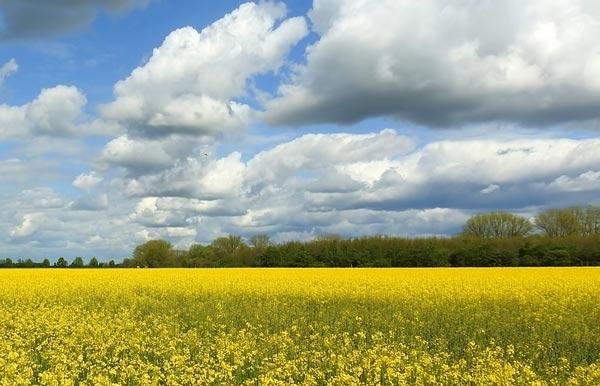 Редеет облаков летучая гряда Анализ стихотворения