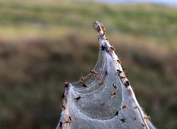 анализ стиха гиппиус пауки