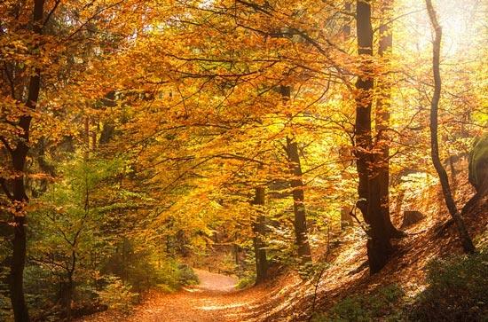 Анализ стихотворения Майкова Осень 3 класс